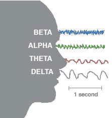 alpha_waves_beta_delta